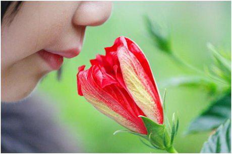 به گفتهی دکتر «صفا طاهرخانی»، مجری طرح تست ارزیابی حس بویایی ویژهی ایران