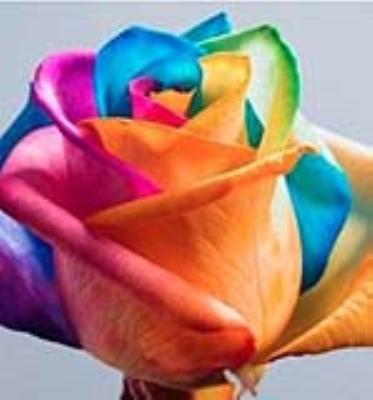 گل چهار رنگ