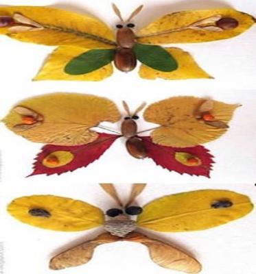 پروانه برگی