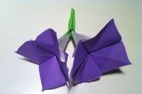 اوریگامی گل  هاردنژیا 1
