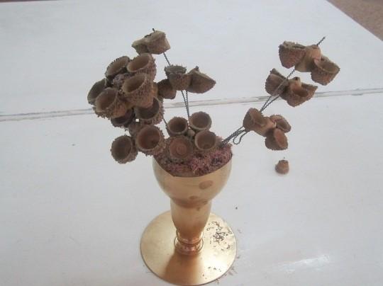 گل با کلاهک بلوط