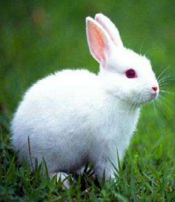 ماجرای باور نکردنی خرگوش