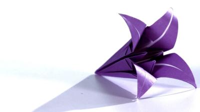 گل لیلیوم کاغذی