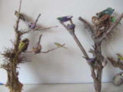 قاب چوب و ریشه