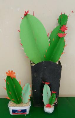 گلدان کاکتوس