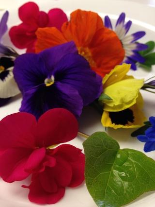 چاپ گل طبیعی روی کاغذ